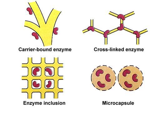 มหัสจรรย์เอนไซม์กับร่างกายมนุษย์ตอน1